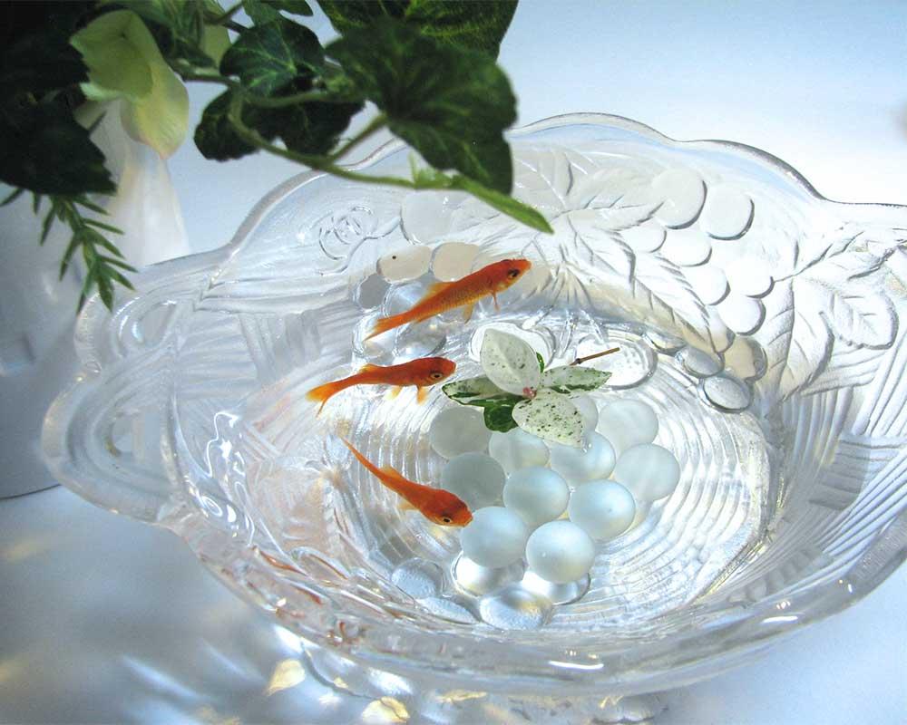 ビー玉と金魚