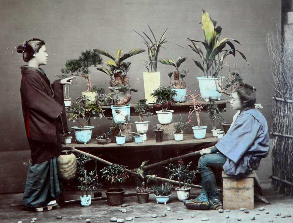 明治時代の女性が盆栽や鉢植えを買い求めている